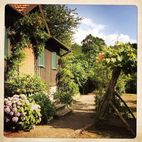 Chalet tra i castagni - Casola in Lunigiana - Houten huisje