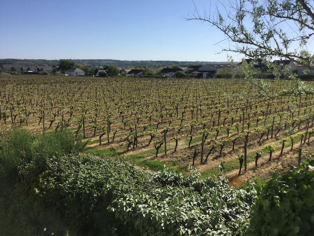 Chambre privée dans le vignoble - Saint-Lambert-du-Lattay - Hus