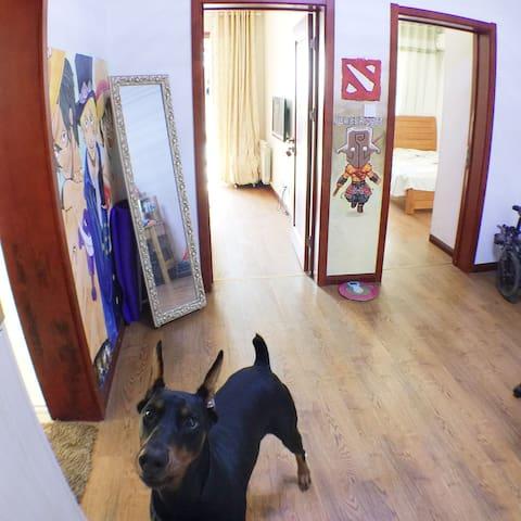 舒适房间和狗(Comfortable rooms and a dog) - Hefei - ที่พักพร้อมอาหารเช้า