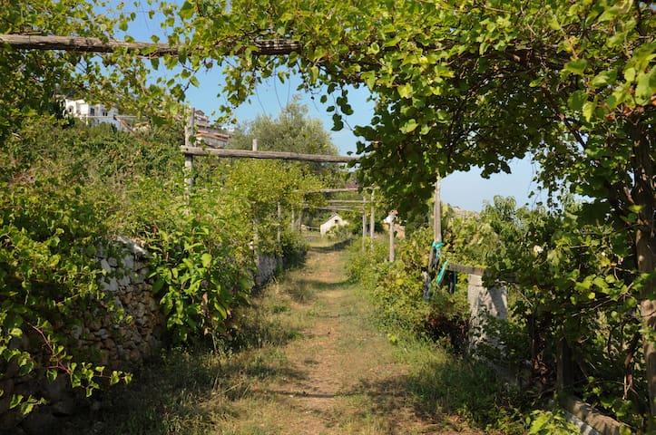 Tra il mare e la collina - Pietra Ligure - Dom