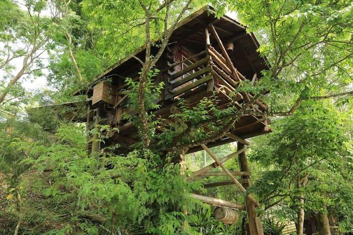 3至7月,滿滿的螢火蟲包圍,等您一起來探尋體驗著生態的奇景 - 嘉義縣 - Rumah