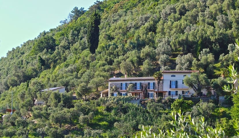 Pisa/Lucca - 2 Olive Grove Houses, Great Pool-Wow! - 聖朱利亞諾-泰爾梅 - 獨棟