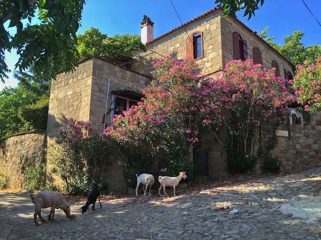 Stone house in a beautiful pine-clad AegeanVillage - Küçükkuyu Belediyesi - Casa