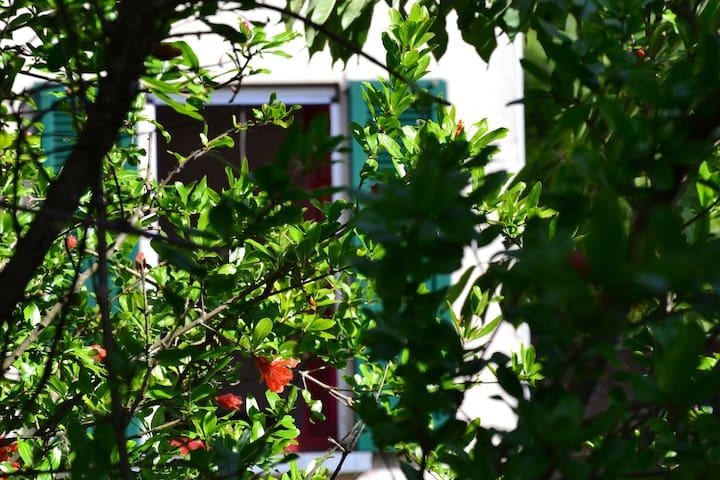 Cascina Scanna  melograno in fiore - Cisliano - Bed & Breakfast