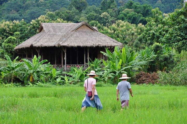 Paddy Field in Lisu Village - Mae Taeng District - Villa