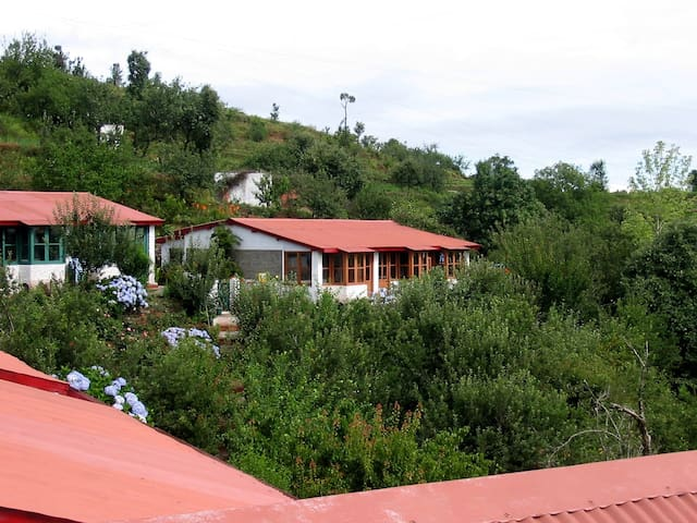 Mountain Trail Resort - Mukteshwar - Mukteshwar