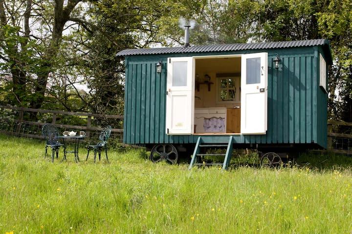 Hafod Las Shepherds Hut - Coedpoeth - Hut