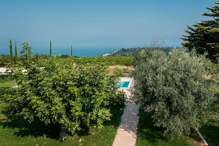 house with pool,hilltop,near the sea, vineyards - Cupra Marittima