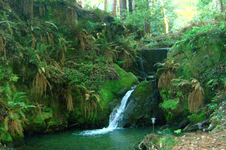 REDWOOD STE - Paradise by the creek - Gualala - Appartement