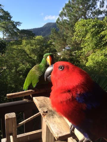 Eclectus Treetops View - Bayview Heights - Casa