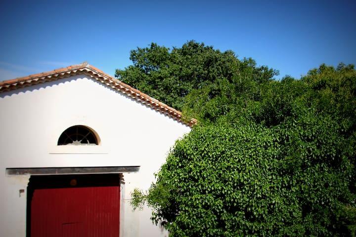 Appartement dans maison vigneronne - Saint-Brès, Hérault - Appartement