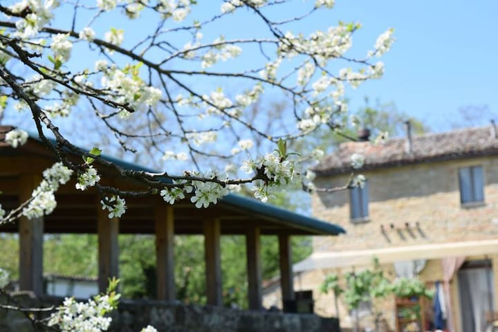 nelle  verdi colline marchigiane - Staffolo - Bed & Breakfast