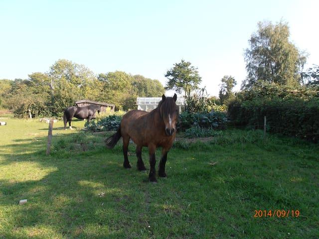 Ferie på landet med dyr - Rønne