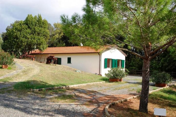 House in woodlands with lawn and private pool - Rosignano marittimo - Maison