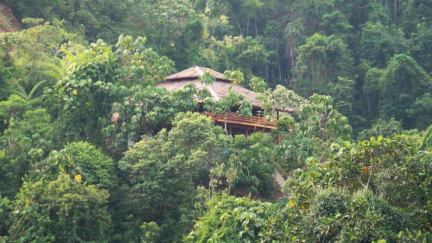 Bukit Lawang Hill Resort - Bohorok