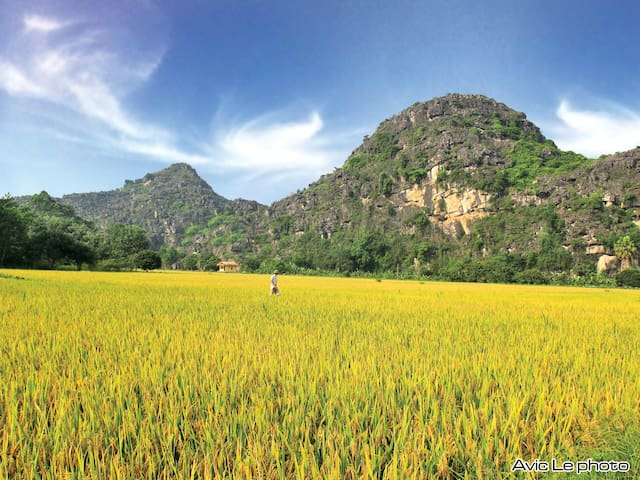 Eco-lodge Ninh Binh - Ninh Binh - Daire