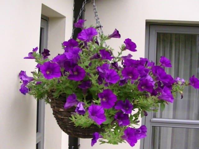 Larkinley Lodge - Easy to Find / Hard to Leave - Killarney - Bed & Breakfast
