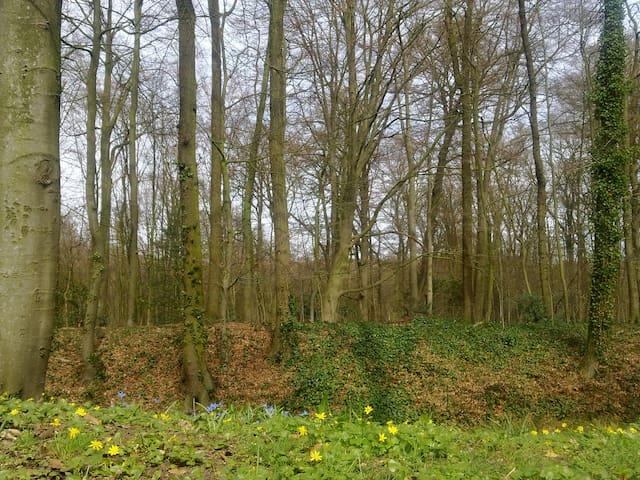 """B&B """"Bed in het Bos"""" - Arnhem - Hus"""