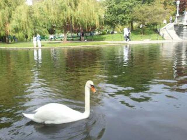 Loving life by the lake - Littleton - Casa