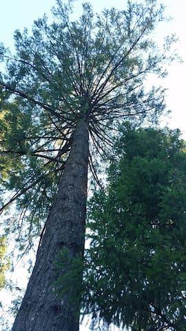 Inn the Trees - a secluded retreat - Nevada City - Leilighet