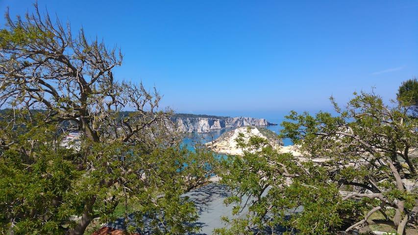Puglia Tremiti Islands Jellyfish Studio | sea&art - Isole tremiti  - Appartement