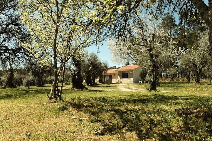 Quinta da Pedra Mija - nature and tranquility - Santar - Вилла