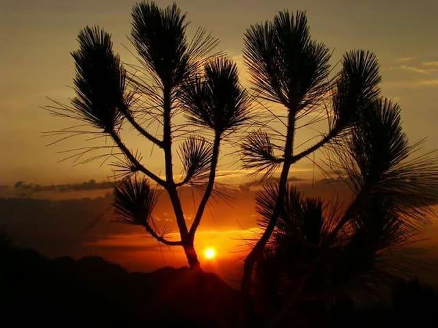 Whistling Pines Deluxe Suite - Solan - Bed & Breakfast