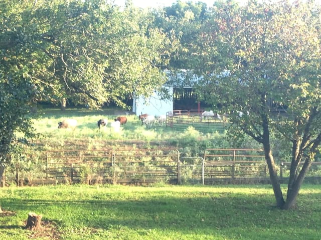 Pasture Space and Empty Horse Barn - Brookshire - Overig