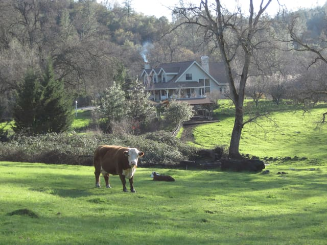 Three Sisters Ranch - Penn Valley