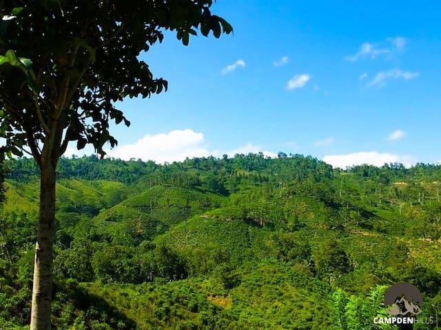Campden Hills Estate Bungalow - Deniyaya - Bungalow