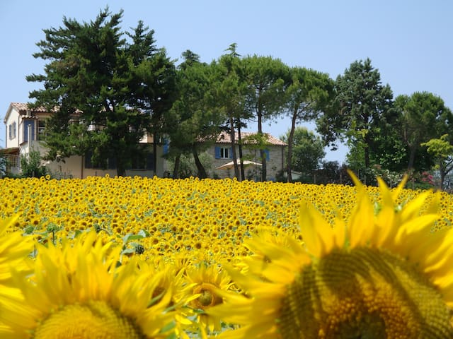 casa Camellia with pool on hillside - Ostra - Casa