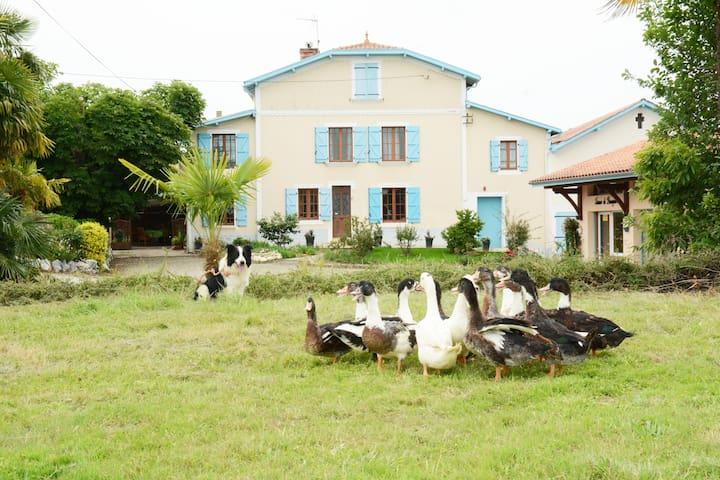 Appartement typique au cœur d'une ferme familiale - Caupenne - Lägenhet