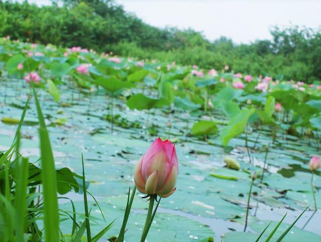Lotus Villa Rooms - Kiribathgoda