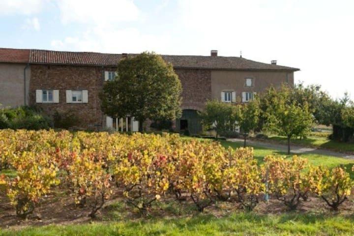 Authentique maison vigneronne - Régnié-Durette