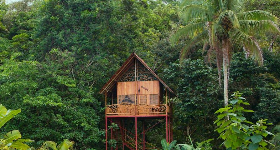 Rainforest Tree House w Hot Springs - Cooper - Casa na árvore