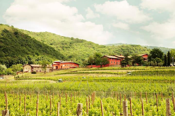 Casa Sassi - Winery stay  - Colloredo di Soffumbergo - Hus