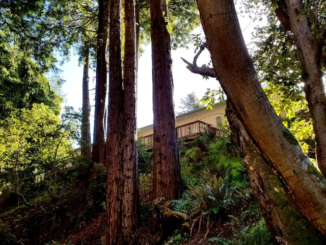 IRIS SUITE - Romance in the redwoods by the creek! - Gualala - Appartement