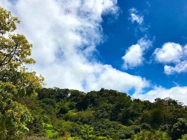 Wide Awake Backpackers - Monte Verde
