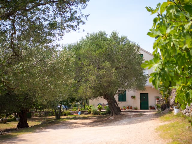 Spacious Apartment In An Olive Grove Estate - Jasenice - 公寓