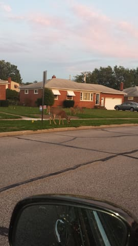RNC HOUSE CLEAN - Willowick - Huis