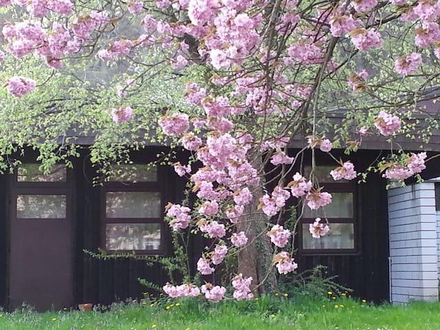 Gästezimmer im Park - Göhrde