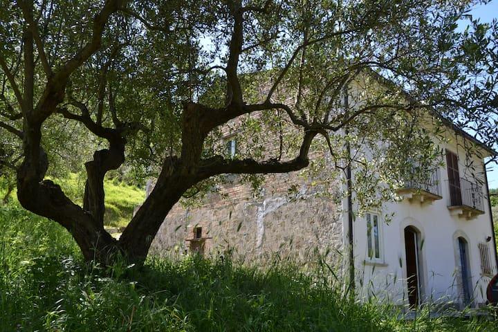 Sleeping between the olive trees in Abruzzo - Torre De' Passeri - Departamento