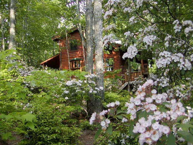 Cozy private entry apt. in a Blue Ridge Mtn cabin - Deep Gap - Appartement