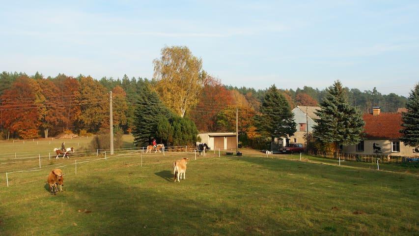 Ferienwohnung in Außenlage - Boitzenburger Land