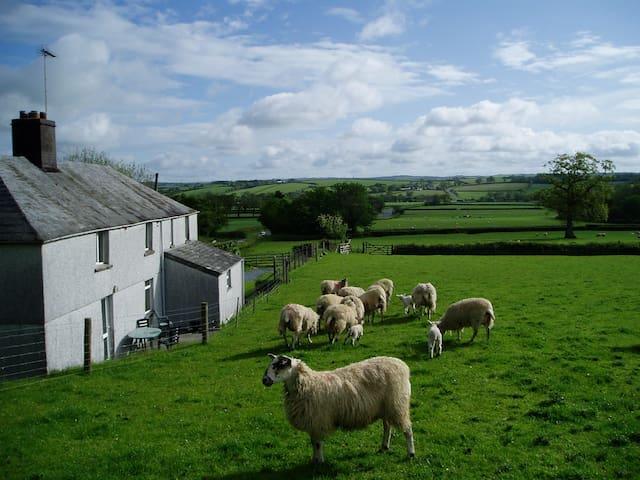 Detached Cottage on working farm. - Launceston - Huis