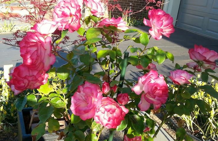 Give you a break in a peaceful house-ROSE room - Melton South - Haus