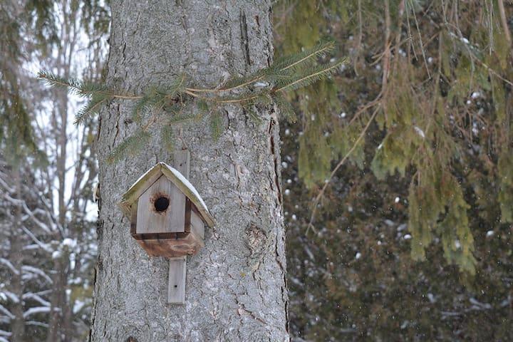 New Cottage listing on Lake Eugenia. - Flesherton
