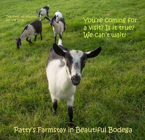 Patty's Farm Stay - Bodega - Leilighet