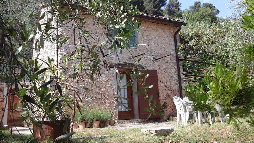 Studio au milieu d oliviers à Carros village - Carros - Appartement