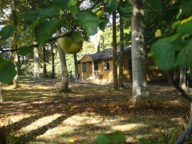 Luxurious cabin in the woods near Longleat - Warminster